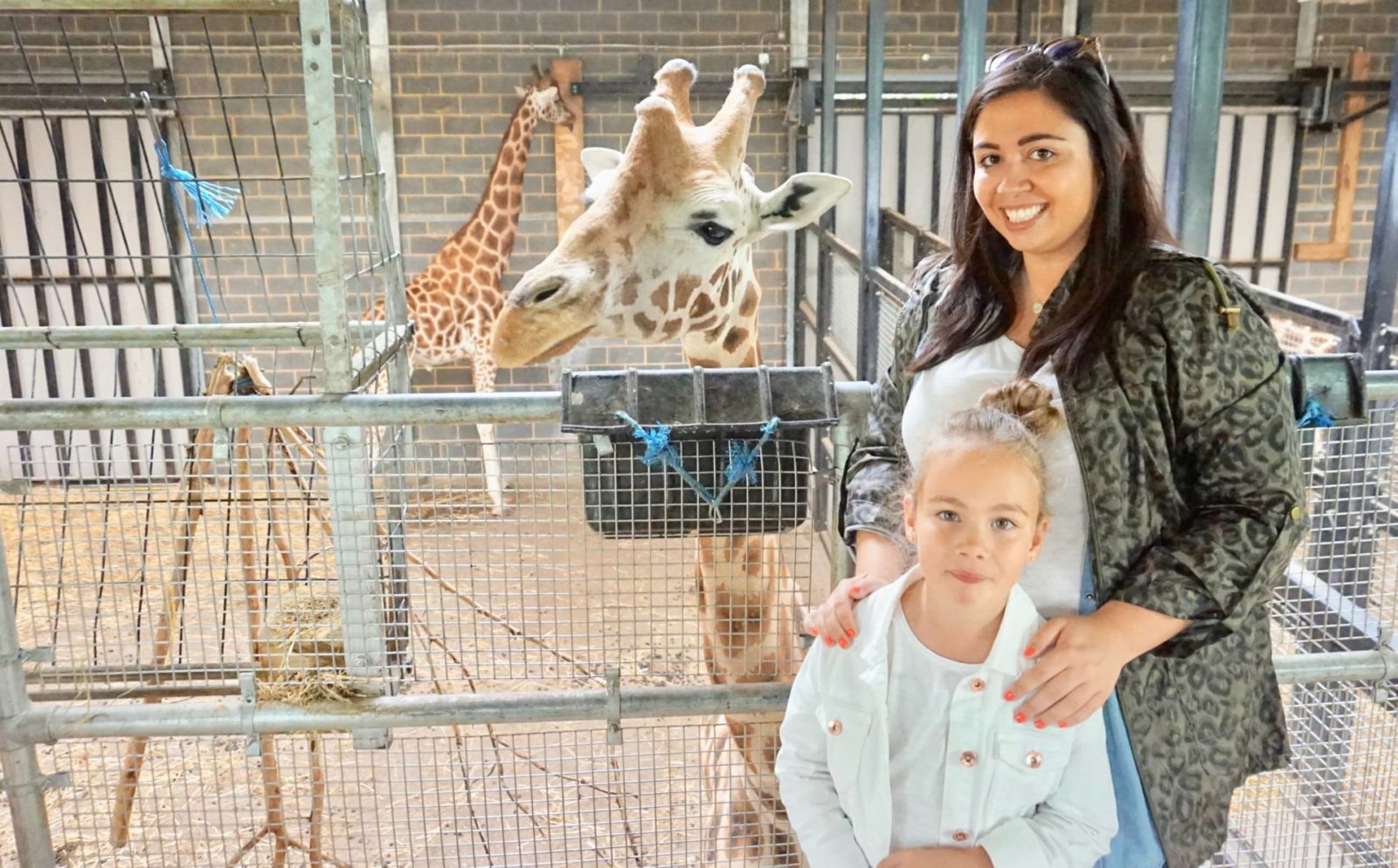 Giraffe-Feeding-Experience-at-Chessington