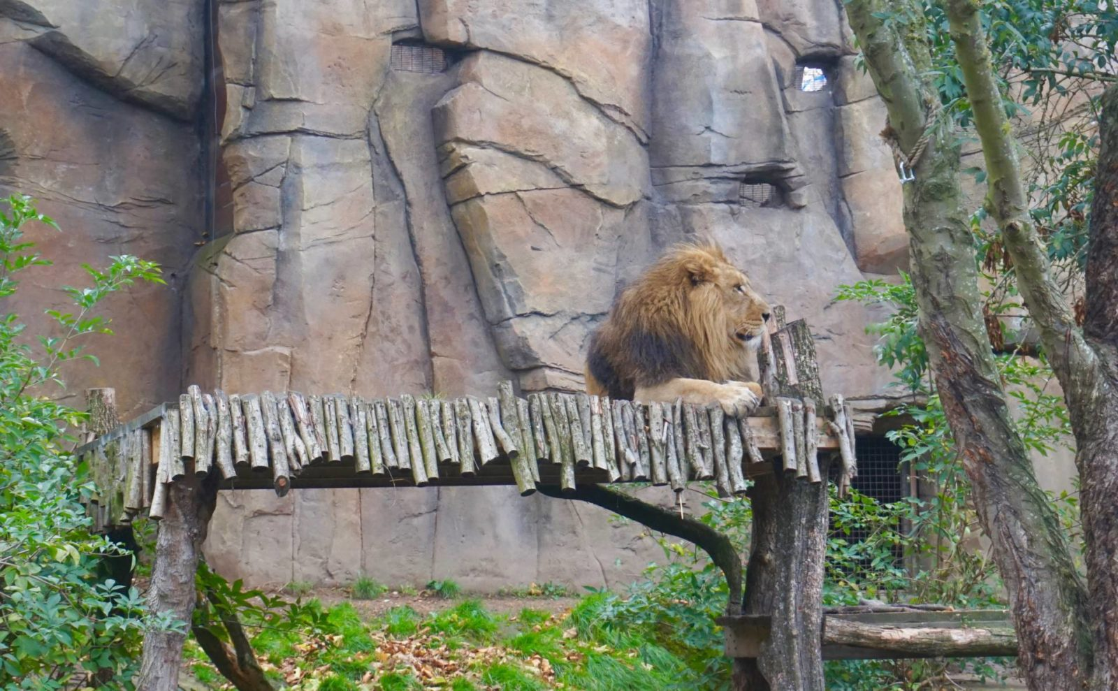 AttractionTix-for-London-Zoo